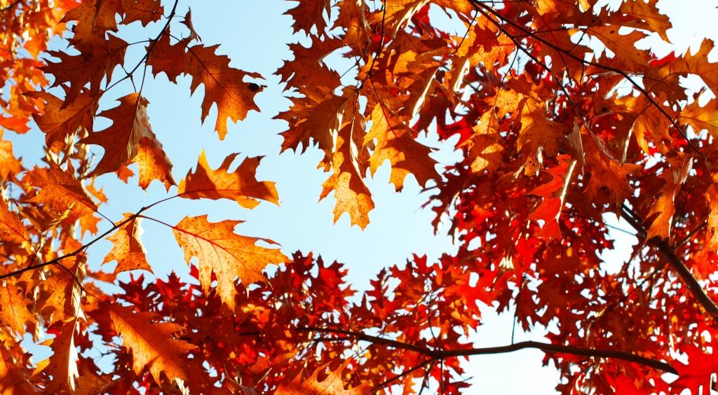 Efterårsferie 15.10-21.10.18
