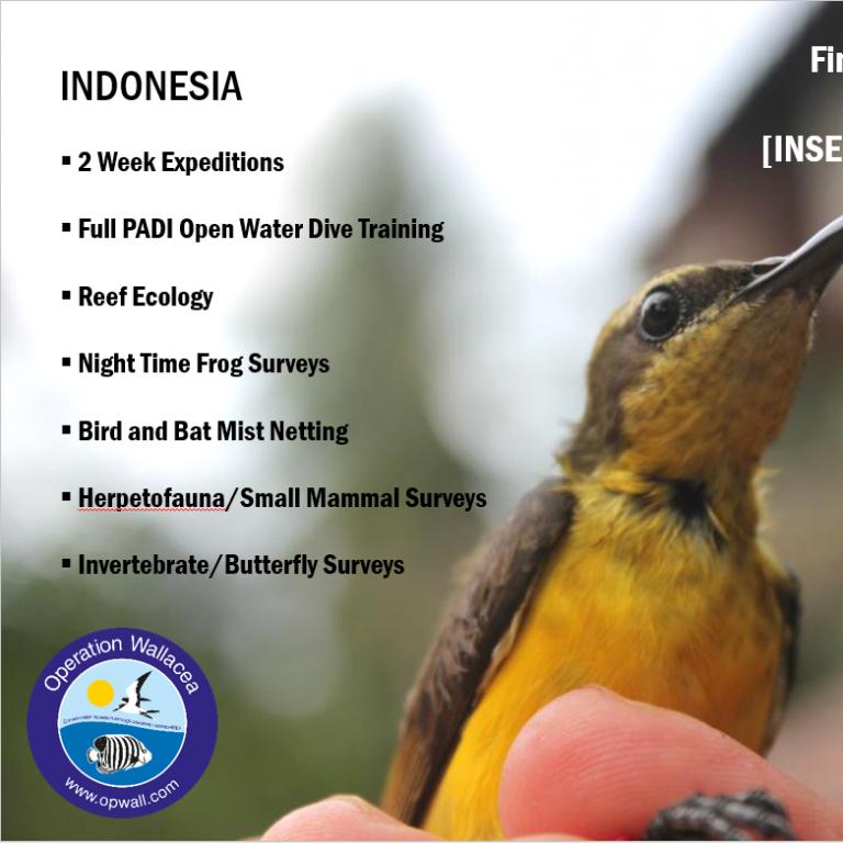 Ekspedition til Indonesien med Wallacea