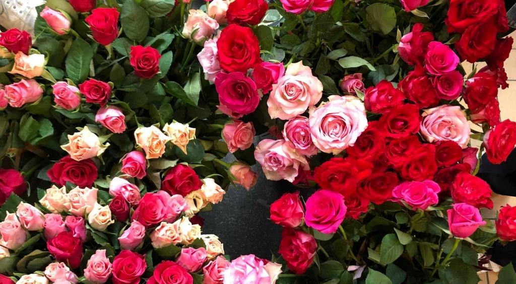 Roser og kærlighed på gymnasiet